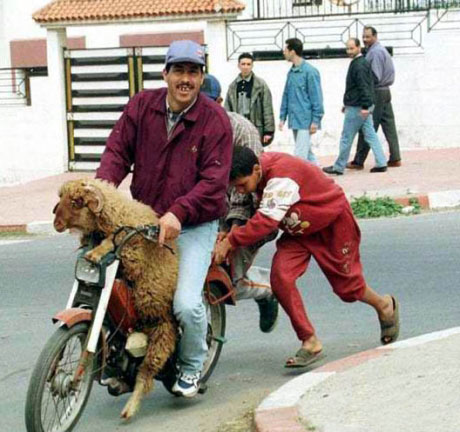 blague algerienne courte 2012