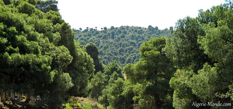 parc-national-tlemcen.jpg